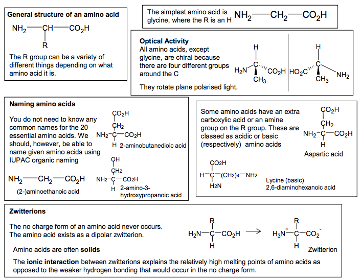 1 amino acids general structure of an amino acid nh2 ch co2h r the r group can be a variety of different things depending on what amino acid it is altavistaventures Image collections